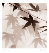 Japanese Maple Leaves No. 2