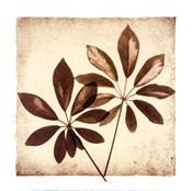 Cassava Leaves