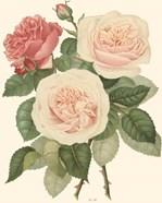 Vintage Roses II