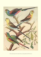 Cassell&#39;s Parakeets IV