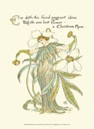 Shakespeare&#39;s Garden XII (Christmas Rose)