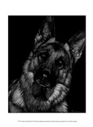 Canine Scratchboard II