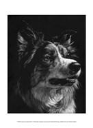 Canine Scratchboard IV