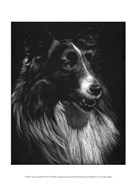 Canine Scratchboard VII