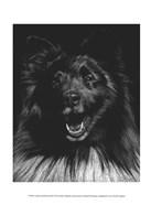 Canine Scratchboard IX