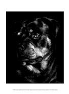Canine Scratchboard XII