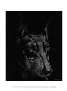 Canine Scratchboard XIII