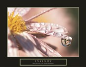 Insight - Dewdrop