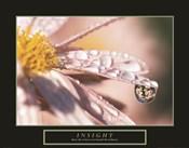 Insight - Dewdrop