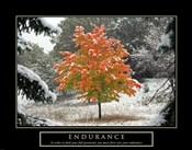 Endurance - Fall Tree