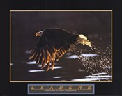 Leaders-Bald Eagle
