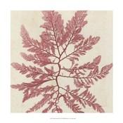 Brilliant Seaweed I