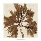Brilliant Seaweed VI