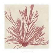 Brilliant Seaweed IX