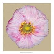 Poppy Blossom III