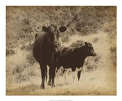 Lone Star Cows I