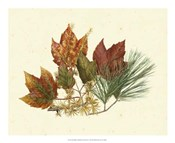 Red Maple, Tamarack &amp; White Pine