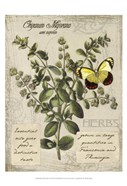 Herbs &amp; Butterflies I