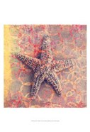 Seashell-Starfish