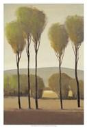 Tall Birches II