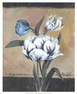 White Tulips I