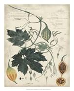 Botanical by Descube I