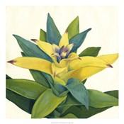 Tropical Bloom II