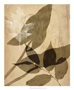 Pressed Leaf Assemblage II