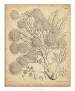 Vintage Curtis Botanical IV