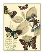 Graphic Butterflies in Nature I