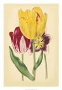 Tulip Array I