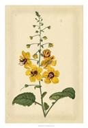 Floral Varieties I