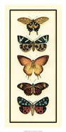 Butterfly Collector V