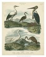 Heron & Crane Species I