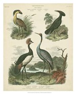 Heron & Crane Species II