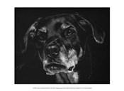 Canine Scratchboard XXII