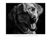 Canine Scratchboard XXIII