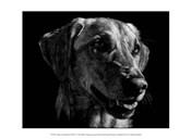 Canine Scratchboard XXIV
