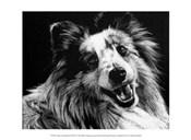 Canine Scratchboard XXVI