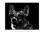 Canine Scratchboard XXIX