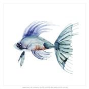 Teal Fish