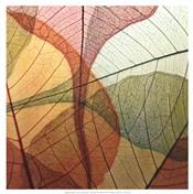 Colourful Leaves I
