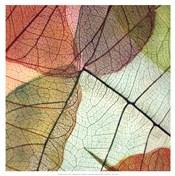 Colourful Leaves II