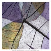 Purple and Grey Leaves II