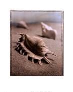 Seashell III