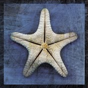 Armored Starfish Underside