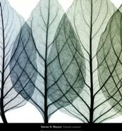Celosia Leaves I