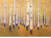 A Portrait Of Aspens