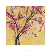 Fuchsia Blossoms II