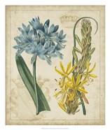 Botanical Repertoire II